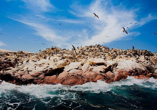 Ilhas Ballestas no Peru