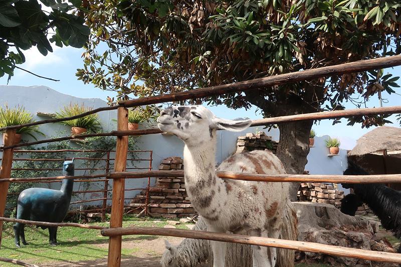 Mundo Alpaca em Arequipa